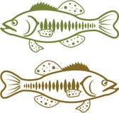 大嘴鲈传染媒介 库存图片