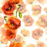 无缝的花卉样片-与明亮的红色边缘条纹的淡色背景 鸦片花设计 免版税库存照片