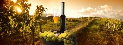 在葡萄园背景的白葡萄酒 免版税库存图片