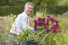 Человек выбирая заводы в центре сада Стоковая Фотография RF