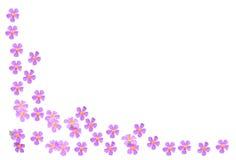 Граница розового утеса розовая Стоковая Фотография