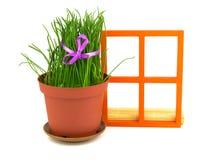 与草的构成在花盆和橙色木窗口 库存照片
