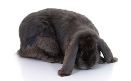 有耳的长的兔子 库存照片