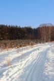 Следы лыжи в лесе зимы Стоковая Фотография