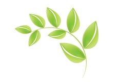 зеленый вектор листьев Стоковое Изображение