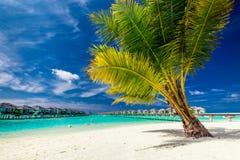 在一个海滩的一棵棕榈树在热带过水别墅前面 免版税库存照片