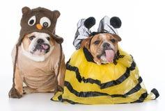鸟和蜂 免版税库存图片