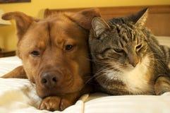 放松猫的狗 免版税库存照片