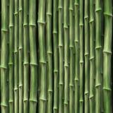 φυτά μπαμπού Στοκ Φωτογραφία