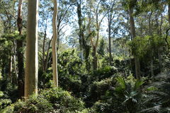澳大利亚沿海温和雨林 免版税库存图片