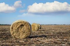 Συγκομιδή στο αγρόκτημα το φθινόπωρο Στοκ Εικόνες