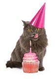 生日快乐党猫用桃红色杯形蛋糕 免版税库存图片