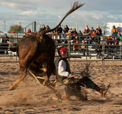 专业圈地公牛骑马 库存图片