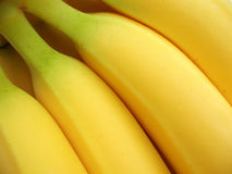香蕉束黄色 免版税库存图片