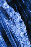 冰川覆盖的树枝 免版税库存照片