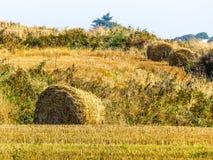 秸杆在领域的干草捆在收获以后 免版税库存图片