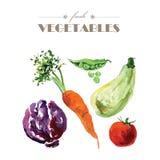 Комплект вектора овощей акварели свежих на белой предпосылке Стоковые Изображения RF