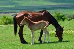与婴孩的一匹马 免版税库存照片