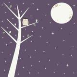 Χαριτωμένη κουκουβάγια στον κλάδο στην έναστρη νύχτα με την όμορφη απεικόνιση υποβάθρου φεγγαριών Στοκ Φωτογραφίες