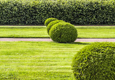 Красиво деланные маникюр кусты сада Стоковое Изображение RF