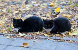 Двойные черные коты сидя в парке Стоковая Фотография