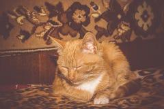 Милый кот имбиря ретро Стоковая Фотография