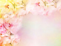 桃红色玫瑰开花边界和框架在葡萄酒颜色华伦泰背景的 库存照片