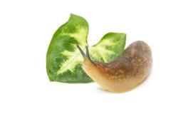 蜗牛画象  免版税库存图片