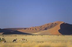 纳米比亚 库存图片