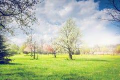 春天公园或庭院有开花的果树、绿色草坪和天空的 免版税图库摄影