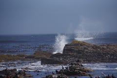 Νησί των πουλιών με τα υψηλά κύματα στο υπόβαθρο Στοκ Εικόνες