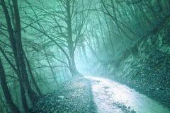 不可思议的有雾的绿色光森林公路 免版税图库摄影