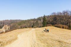 Οι αναβάτες στην πλάτη αλόγου οδηγούν Στοκ Φωτογραφίες