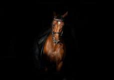 马和车手在黑暗中 免版税库存照片