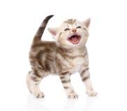 Γατακιών η ανασκόπηση απομόνωσε το λευκό Στοκ εικόνα με δικαίωμα ελεύθερης χρήσης