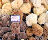 自然海绵 库存图片