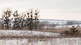 阴沉的横向冬天 免版税图库摄影