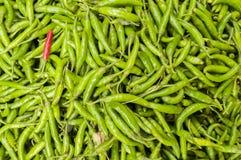 Красные чили среди всех других зеленый цвет Стоковая Фотография