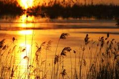 κάλαμος φθινοπώρου Στοκ Φωτογραφίες