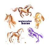 逗人喜爱的马的水彩手拉的例证 库存图片