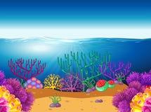与水下的珊瑚礁的自然场面 库存图片