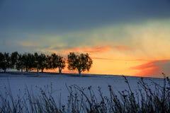 农村风景冬天 在普利亚和巴斯利卡塔之间 日出:多雪的橄榄树小树林 -意大利 图库摄影