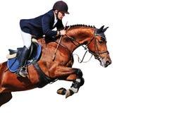骑马者:与海湾马的车手在跳跃的展示,被隔绝 图库摄影