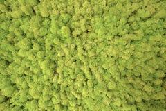 Текстура увиденная лесными деревьями сверху Стоковое Изображение