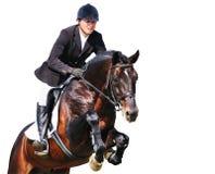 骑马者:与海湾马的车手在跳跃的展示,被隔绝 免版税库存照片