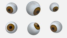 许多褐色眼睛球自转 股票录像