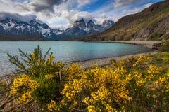 在山湖的岸的美丽的花 免版税库存图片
