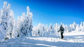 享受雪和冰川覆盖的树的冬天风景女子滑雪者 库存图片