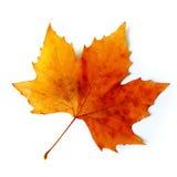 листья падения Стоковое фото RF