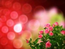 在焦点背景的玫瑰花束 免版税库存照片